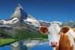 foto-svycarsko-800pxjpg.jpg